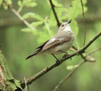 animal-animal-world-avian-2
