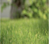 blades-environment-grass-2